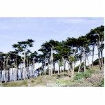 Árboles de Cypress en el parque de Sutro, San Fran Esculturas Fotográficas