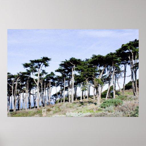 Árboles de Cypress en el parque de Sutro, San Fran Posters