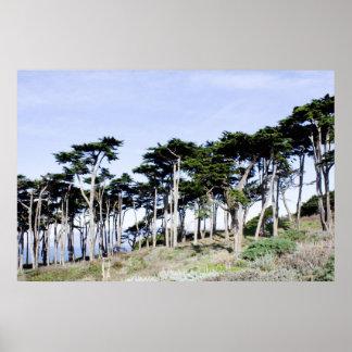 Árboles de Cypress en el parque de Sutro, San Fran Póster