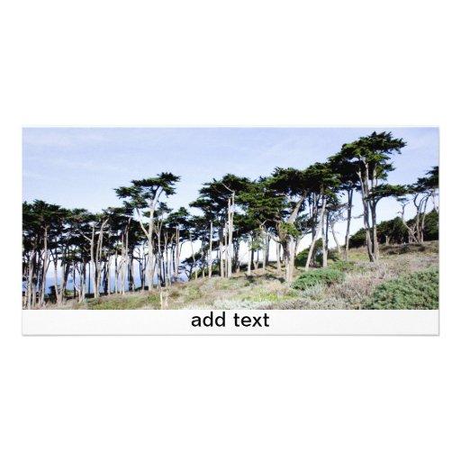 Árboles de Cypress en el parque de Sutro, San Fran Tarjetas Con Fotos Personalizadas