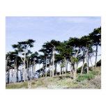 Árboles de Cypress en el parque de Sutro, San Fran Postales