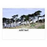 Árboles de Cypress en el parque de Sutro, San Fran Tarjetas Postales