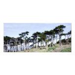 Árboles de Cypress en el parque de Sutro, San Invitación 10,1 X 23,5 Cm