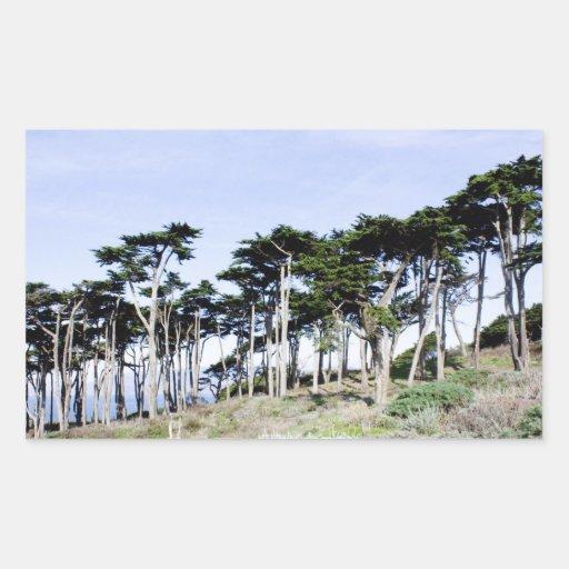 Árboles de Cypress en el parque de Sutro, San Rectangular Altavoz