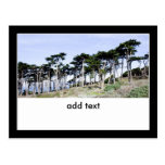 Árboles de Cypress en el parque de Sutro, San Postal