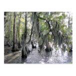 Árboles de Cypress en la postal de Phelps NC del l