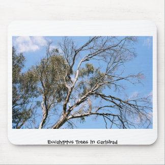 Árboles de eucalipto en Carlsbad Tapetes De Ratones
