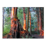Árboles de fuego postal