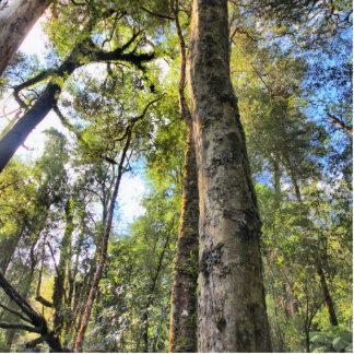 Árboles de goma australianos de eucalipto de la imán fotoescultura