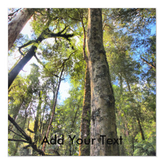 Árboles de goma australianos de eucalipto de la invitación 13,3 cm x 13,3cm