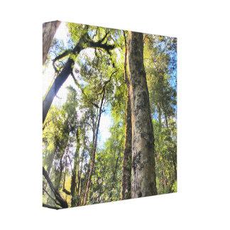 Árboles de goma australianos de eucalipto de la impresiones de lienzo