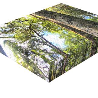 Árboles de goma australianos de eucalipto de la impresión en lienzo estirada