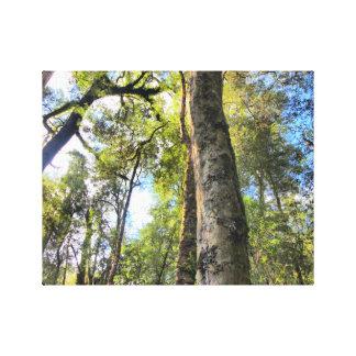 Árboles de goma australianos de eucalipto de la impresión en tela