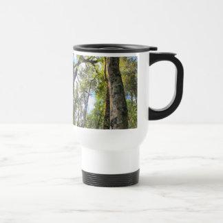 Árboles de goma australianos de eucalipto de la taza térmica