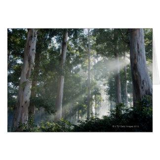 Árboles de goma (eucalipto) en la selva tropical T Felicitación