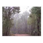 Árboles de goma tarjetas postales
