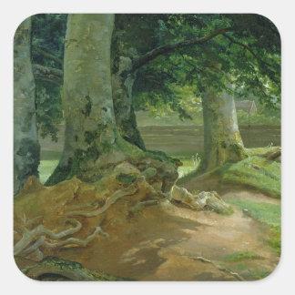 Árboles de haya en Frederiksdal cerca de Pegatina Cuadrada