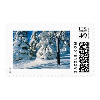 Árboles de hoja perenne nevados timbres postales