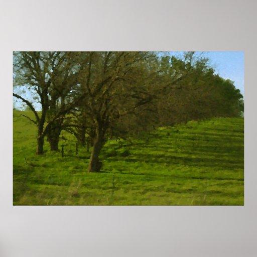 Árboles de Kansas Posters