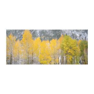Árboles de la caída de Colorado Lienzo Envuelto Para Galerías