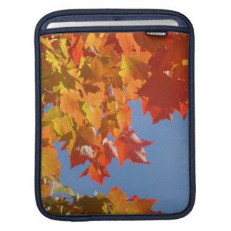 árboles de la caída de las hojas de otoño de los r manga de iPad