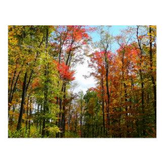 Árboles de la caída y postal del cielo azul