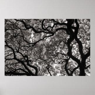 Árboles de la magnolia en el flor 02 póster