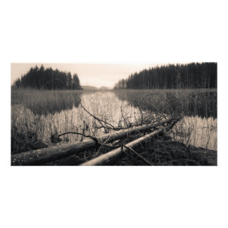 Árboles de la orilla plantilla para tarjeta de foto
