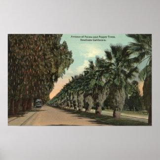 Árboles de la palma y de pimienta junto a avenida poster