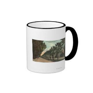 Árboles de la palma y de pimienta junto a avenida taza de café