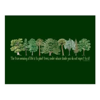 Árboles de la planta tarjeta postal