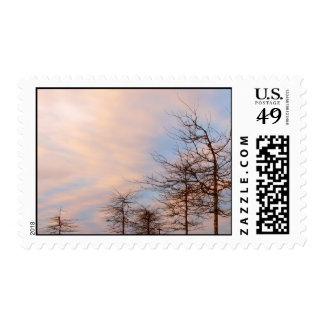 Árboles de la puesta del sol en invierno sellos