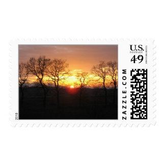Árboles de la puesta del sol en sellos de la