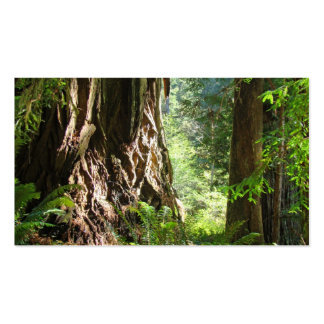 Árboles de la secoya de las tarjetas de visita del