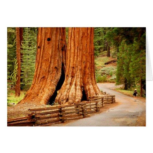 Árboles de la secoya de Yosemite Tarjeta De Felicitación