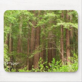 Árboles de la secoya en el monumento nacional de mouse pads