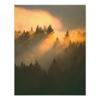 Árboles de la secoya en la niebla costera, el cond fotografias