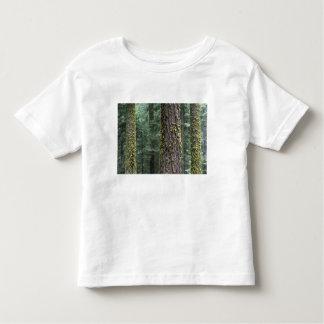 Árboles de la secoya gigante en el bosque, secoya playera de bebé