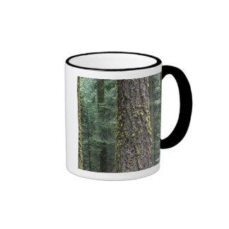 Árboles de la secoya gigante en el bosque secoya taza de café