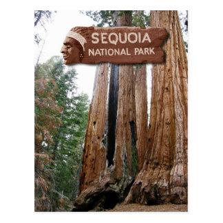 Árboles de la secoya gigante, parque nacional de s tarjeta postal