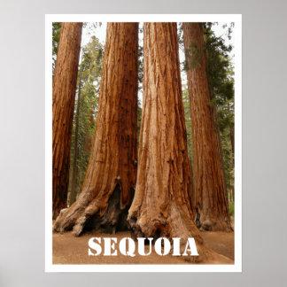 Árboles de la secoya, parque nacional de secoya, C Poster