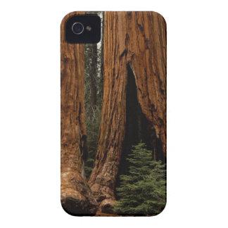 Árboles de la secoya, parque nacional de secoya iPhone 4 Case-Mate coberturas