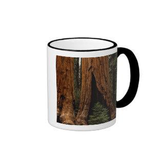 Árboles de la secoya, parque nacional de secoya taza de dos colores