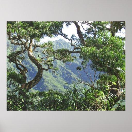 Árboles de las montañas y de Koa de Ko'olau Póster