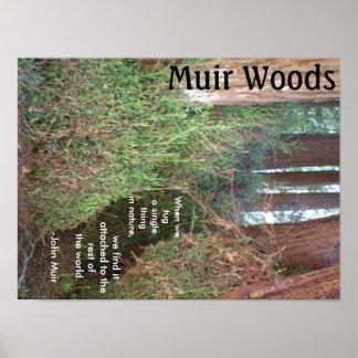 Árboles de maderas de Muir con cita Póster