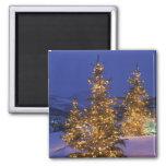 Árboles de navidad, Park City, montañas de Wastch, Imán Cuadrado
