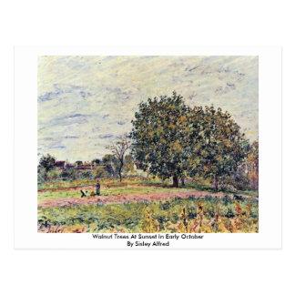 Árboles de nuez en la puesta del sol a principios  tarjeta postal