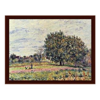 Árboles de nuez en la puesta del sol a principios  tarjetas postales