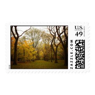 Árboles de olmo del otoño en el Central Park, New Franqueo
