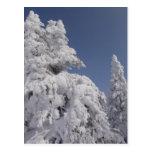 Árboles de pino cubiertos nieve postal